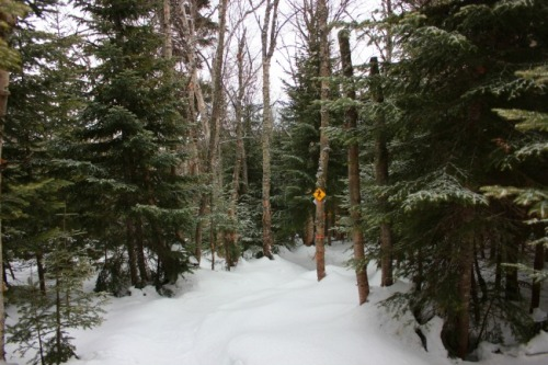 Quebec - Le Massif trail