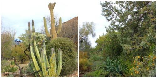 Arizona - Sonoran desert duo