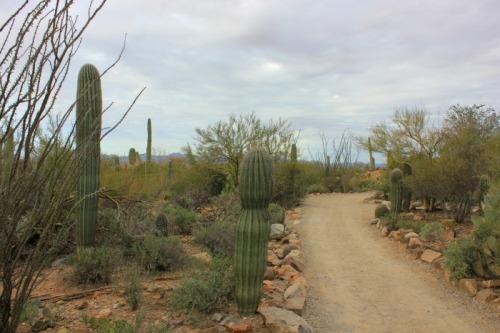 Arizona - Sonoran desert museum