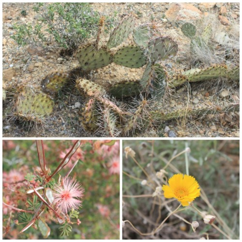 Arizona - Tucson desert trio