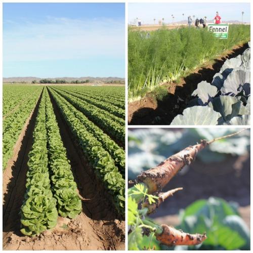 Arizona - farm to table