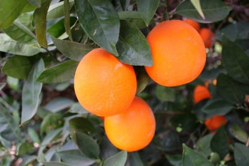 Arizona - oranges