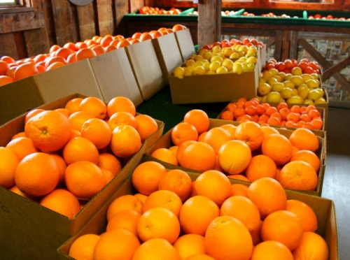 Arizona - Orange Patch offerings