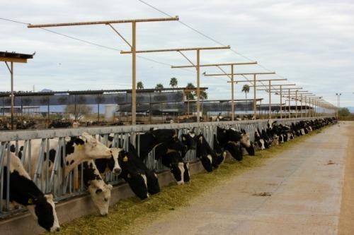Arizona - Superstition dairy