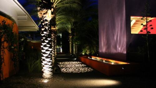 Scottsdale Saguaro night path