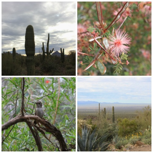 Arizona - sonoran desert museum collage