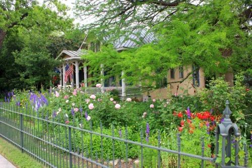 San Antonio - flower 2