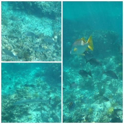 Grand Turk fish