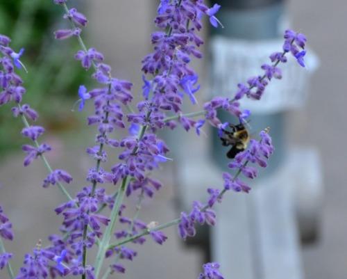 Toronto - bee