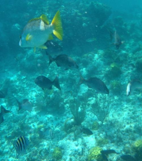 Grand Turk - snorkeling