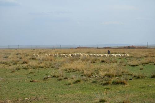 China - Inner Mongolia grasslands