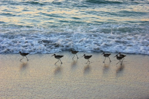 Palm Island - birds