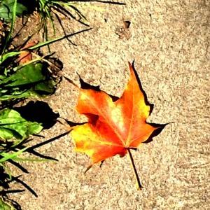 Toronto - autumn leaf