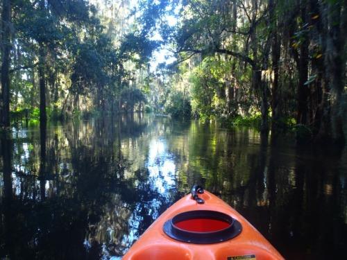 Orlando - Shingle Creek kayaking