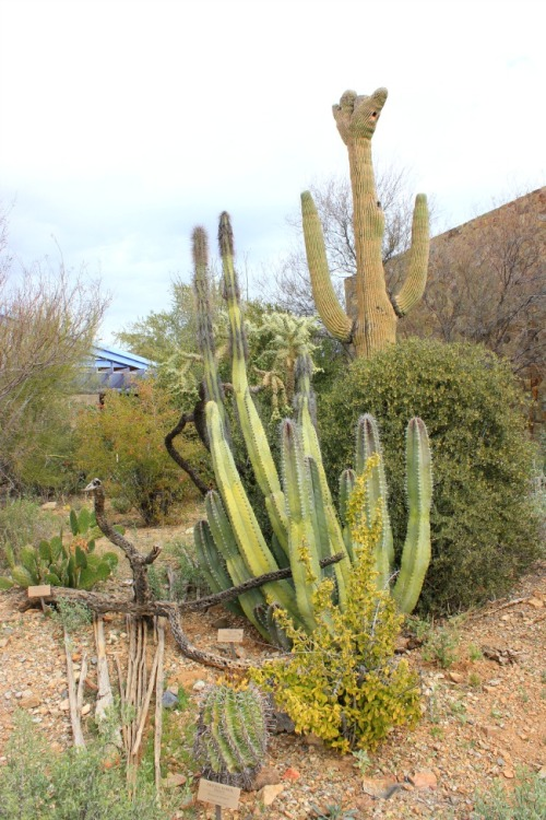 Arizona - Sonoran desert museum 1