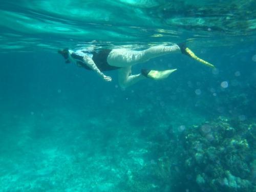 Grand Turk - snorkeller