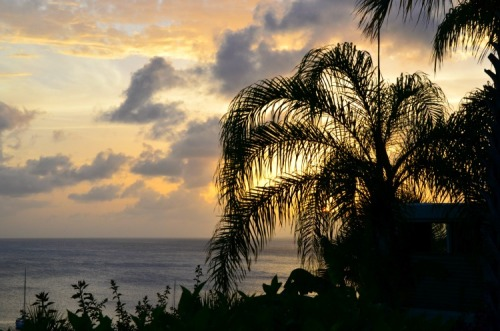 Anguilla palm sunset